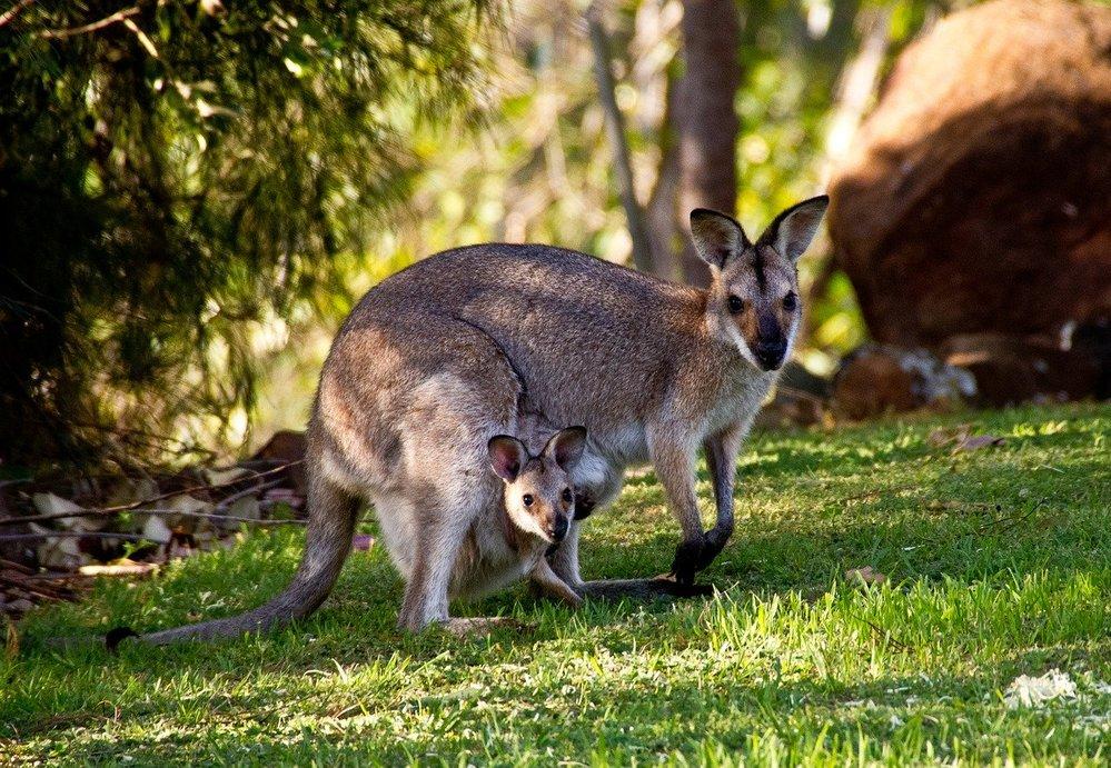 Esperienza-estero-Australia-studenti